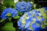 Blue, blue, my world is blue