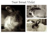 Dear Sweet Violet Triptych