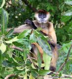 Monkey On Island