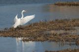 DSC01065 - Egret Landing