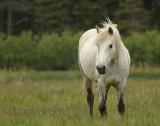 _DSC1860 - White Horse