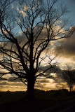 _DSC5271- Tree and Sunset