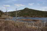 _DSC5959 - Dead Trees Landscape