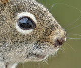 DSC00222 - In a Squirrel's Eye