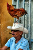 the rooster guy