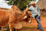 farmer and his oxen team