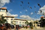 pigeon plaza