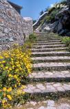 Flowered Steps