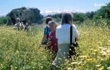 Wildflowers at Aptera