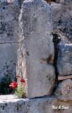 flowering rock