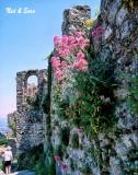 flowersing wall at Mistra