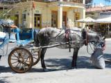 One mode of transport on Aegina