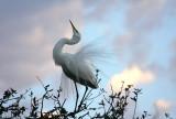 Greeting the Dawn at Audubon Park