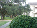 Carville grounds with ancient live oaks