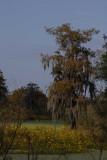 Autumn in the Wetlands of Louisiana