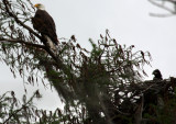 Eaglet Outing