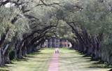 Oak Alley from a higher view