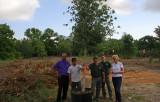 Live Oaks Planted on Marsh Island