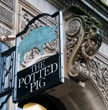 The Potted Pig