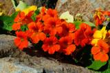 Flores Unla