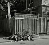 Back alleys 2009 -10-11
