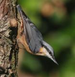 East Lothian's Birds