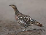 Birds of the Scottish Highlands