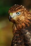 Hawk by Rebecca Wood. 18 points