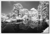 Black & White Infrared