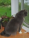 indoor cat - brenda