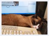 Oh no annoying cat - Catman