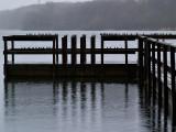 Swallows n Pouring Rain_1-Shirley