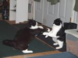 Dance Position 1 -- Shirley A