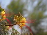 Tree Flowers - Kevdog