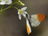 4th place: Fine nectar - Miro