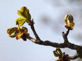 Spring - Geophoto
