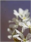 You do Bees, I do Gnats-Shirley