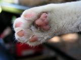 Resting - Catman