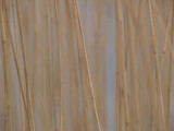 Reeds - Bruce Clarke