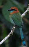 Digiscoping Costa Rica, Dec 2011