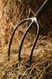 Hay Fork