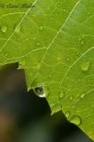Drip. Drop