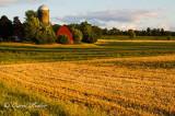 Farm in Warm Light