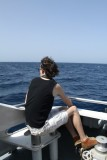 whale and dolphin trip