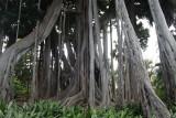 Jardin Botanico - Puerto de la Cruz