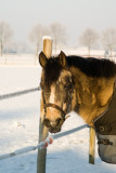 Horses in our Care