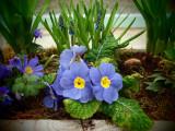 Springtime Blues