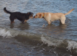 Fudge and friend