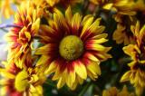 Floral Sunshine...