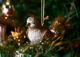 Indoor Bird Watching
